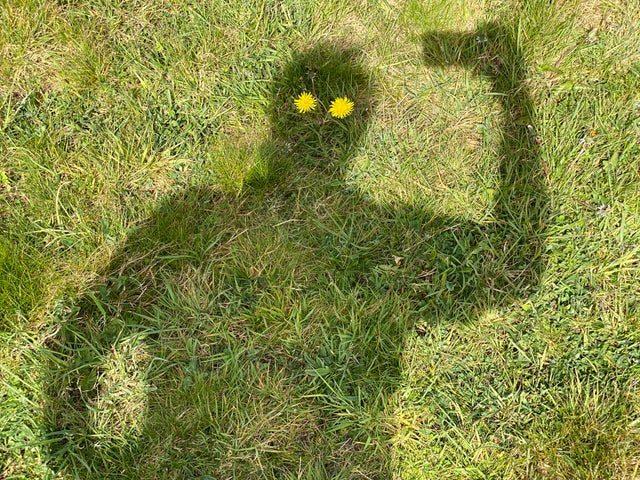 Schaduwbeeld van een man waarvan de ogen paardenbloemen zijn